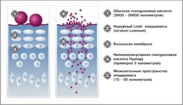 Гилауроновая кислота действие