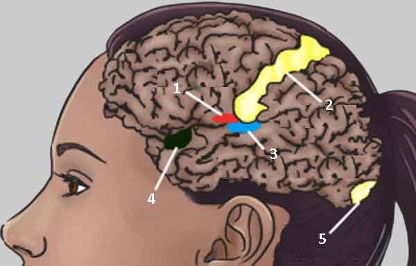 Феноменальное восприятие синестезия