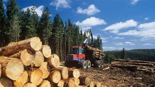 Обязательное сохранение лесов