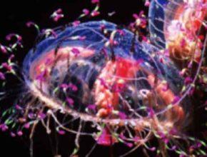 Разработана новая технология «4i» визуализации белков