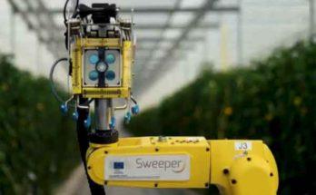 SWEEPER – сельскохозяйственный робот-уборщик перца