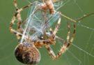 Изучается шёлк паука для создания строительных блоков