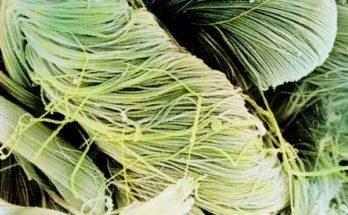 Коллагеновые фибриллы тщательно исследованы учёными