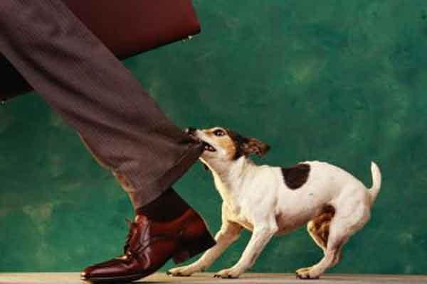 Виртуальная собака - инструмент защиты человека