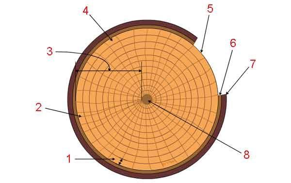 Натуральный композит в образе дерева