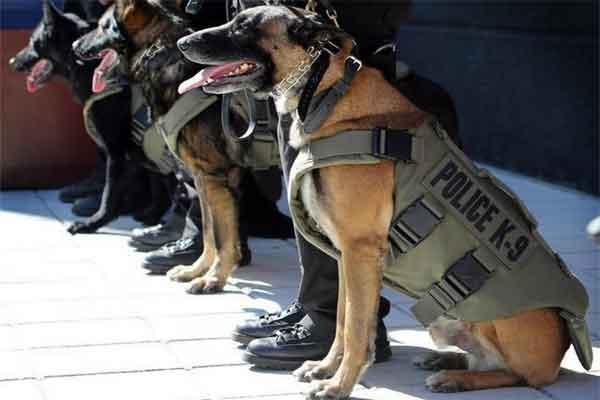 Пуленепробиваемый жилет для собак