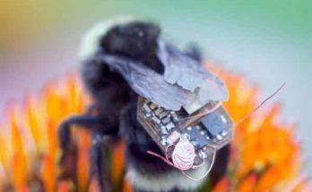Как насекомые - пчёлы и шмели, вытесняли беспилотники