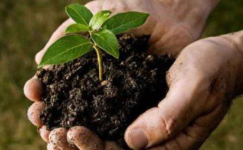 Биосолиды: полезный побочный продукт фильтрации сточных вод