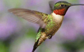 Робот колибри создан против стандартов обычной аэродинамики