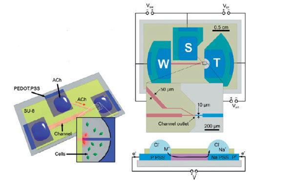 Схемотехника биопротонного транзистора