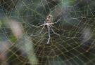 Модель паутины для лучшего изучения специалистами природной ловушки
