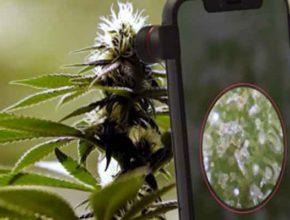 Различить конопля или марихуана поможет уникальный сканер фермера
