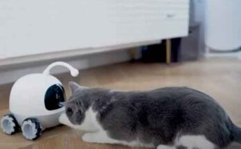 Робот Rocki – онлайн сервис домашним животным под замком